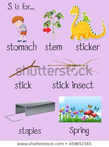 Flashcard letter S is for stem Stock photo © bluering