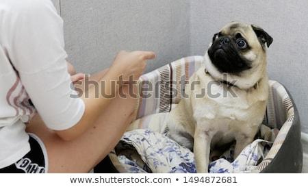 Person Scolding Dog Stock photo © AndreyPopov
