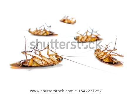 группа насекомые белый глазах фон ног Сток-фото © bluering