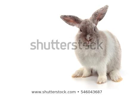 Cute кролик белый мех иллюстрация улыбка Сток-фото © bluering