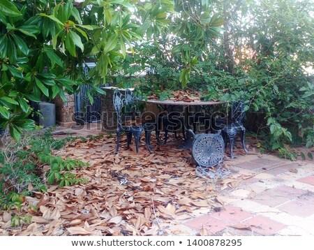 Oude verlaten onzin fontein water ecologie Stockfoto © romvo