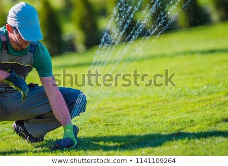 スプリンクラー · 自動 · 水まき · 草 · 日没 · 太陽 - ストックフォト © nenovbrothers