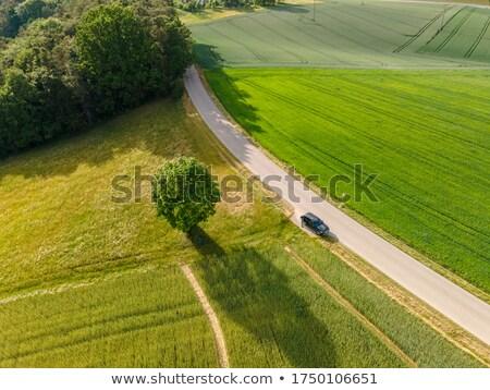 зеленый области текстуры Германия природы Сток-фото © LightFieldStudios