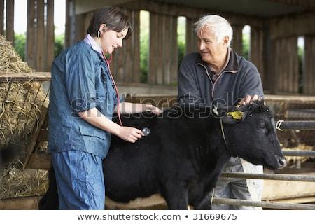 gazda · állatorvos · megvizsgál · farm · munkás · állás - stock fotó © monkey_business