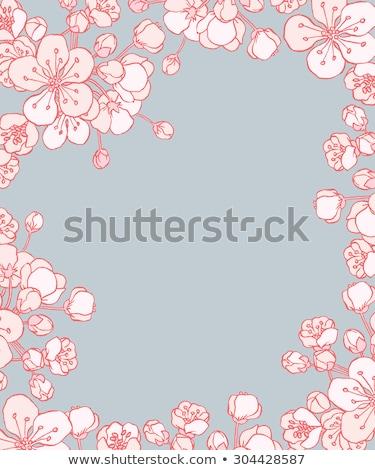 cereja · flores · vetor · primavera · cartão · decoração - foto stock © frimufilms