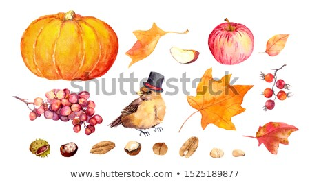 Set of cute animals and harvest ripe vegetables and fruits isolated on white background. Vector cart Stock photo © Lady-Luck