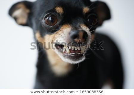 Deli küçük köpek karikatür örnek bakıyor Stok fotoğraf © cthoman