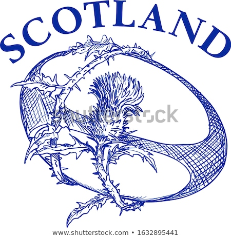 Rugby Ball With Scotch Thistle Drawing Stock photo © patrimonio