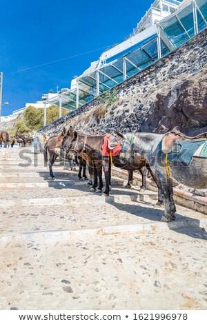 Burro passos ilha santorini Grécia Foto stock © feverpitch