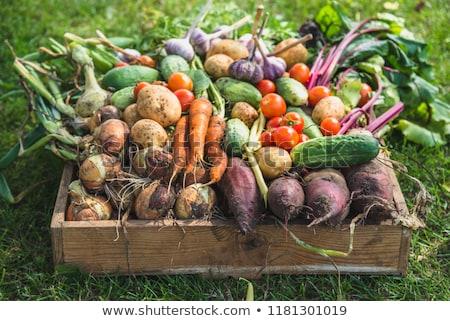 精進料理 エコ 食品 自然 成分 配信 ストックフォト © foxbiz