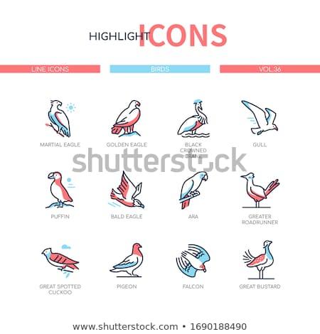Vogel soorten moderne lijn ontwerp stijl Stockfoto © Decorwithme