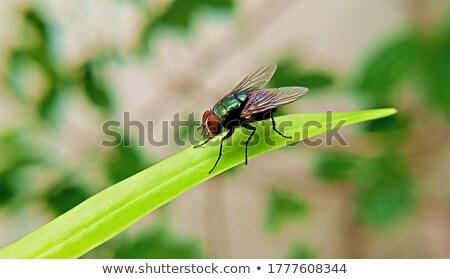 Peça tecido voar branco animal asas Foto stock © ldambies