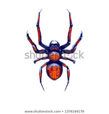 Egzotikus veszély pók piros foltok rajz Stock fotó © evgeny89