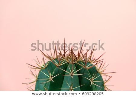 кактус растений украшение таблице комнату отель Сток-фото © iko