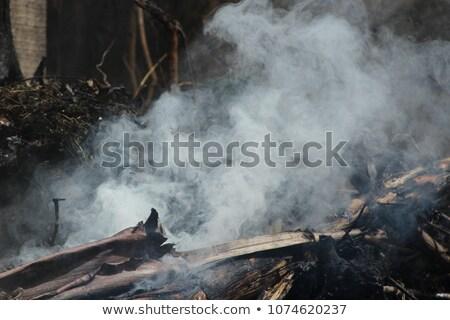 Busch Feuer Baum Wald Umwelt Stock foto © lovleah