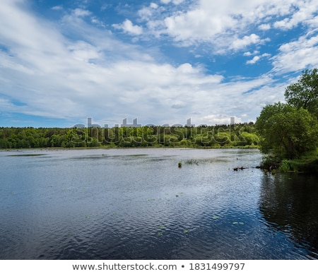 Summer rushy lake Stock photo © wildman