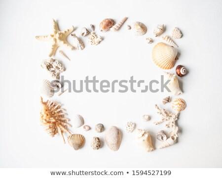 Conchiglia frame conchiglie spiaggia fiore Foto d'archivio © OliaNikolina
