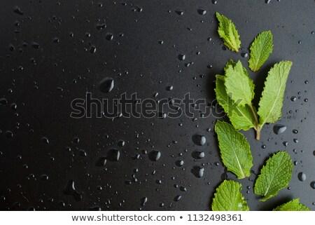 Kokteyl nane yaprakları yalıtılmış beyaz gıda Stok fotoğraf © nurrka