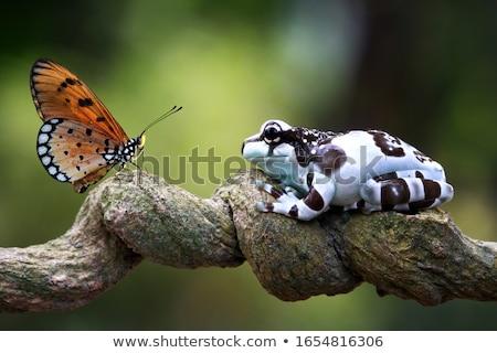 Küçük tropikal karakurbağası Tayland orman odak Stok fotoğraf © smithore
