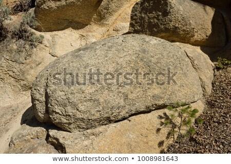 Graniet yosemite erosie yosemite national park natuur rock Stockfoto © wildnerdpix