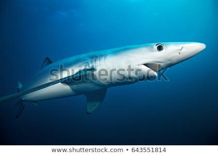 青 · サメ · 海 · のような · キラー · 水 - ストックフォト © Laracca