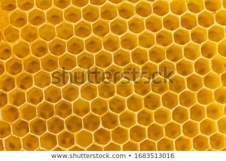 Foto d'archivio: Honeycomb Close Up