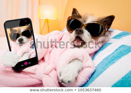 poodle and phone stock photo © cynoclub