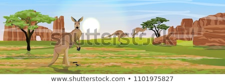 wildlife australia background stock photo © dagadu