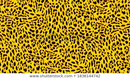 gepárd · végtelenített · vektor · minta · állat · bőr - stock fotó © creative_stock