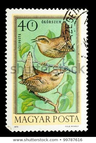 鳥 古い スタンプ ハンガリー スタンプ ストックフォト © samsem