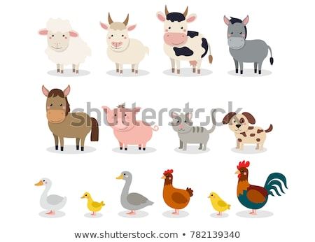 illustration of isolated farm animals set on white background Stock photo © balasoiu