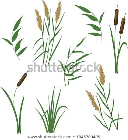 Moeras planten water blad Stockfoto © njnightsky