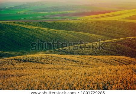 Gazdálkodás absztrakt természetes hátterek szépség virágok Stock fotó © tolokonov