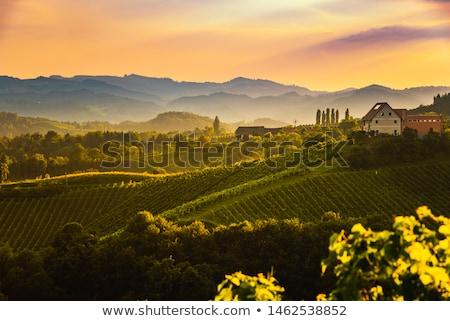 Toszkána · ház · út · bor · nap · naplemente - stock fotó © magann
