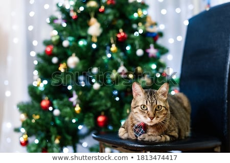 Kitten looking at the Christmas tree on a white Stock photo © vlad_star