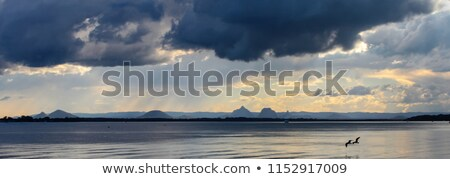 Sirály sötét eső felhők tengerpart természet Stock fotó © meinzahn