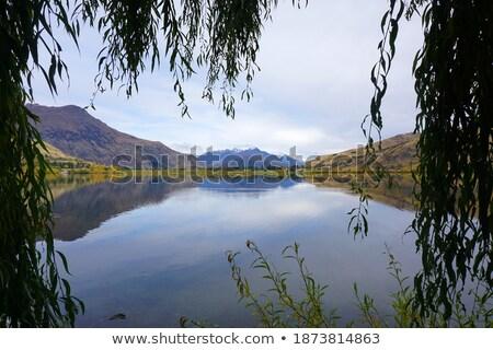 fa · ősz · tó · barna · égbolt · fa - stock fotó © bradleyvdw