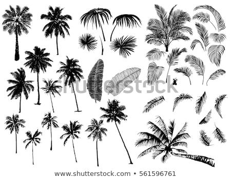 Stockfoto: Ingesteld · palmboom · tropische · palmbomen · zwarte · silhouetten