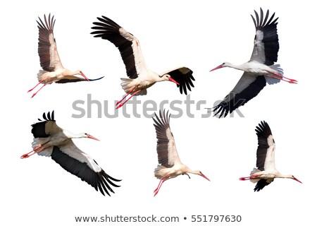 Unter Storch weiß Vogel Flügel Flug Stock foto © manfredxy
