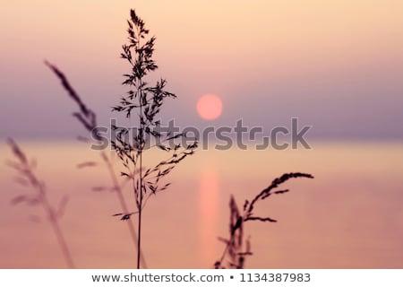 belo · pôr · do · sol · calma · oceano · nuvens - foto stock © chrisga