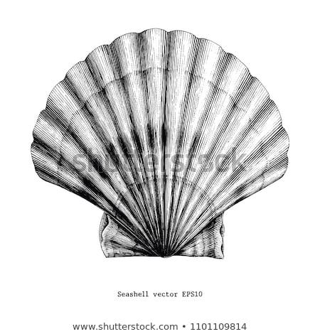 оболочки поверхность улитки спиральных морской Сток-фото © jeancliclac