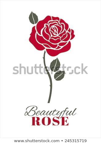 Kırmızı stilize gül yaprak çiçek sevmek Stok fotoğraf © aliaksandra
