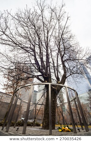Survivor Tree, Manhattan, New York. Stock photo © kasto