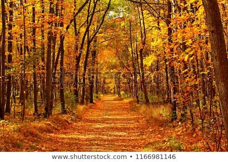 Fa ősz díszlet narancsfa ág fa Stock fotó © carloscastilla