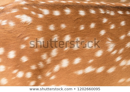 textured fur of a fallow deer stock photo © taviphoto