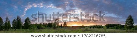 Stok fotoğraf: Ağaç · siluet · güzel · canlı · gün · batımı · bulutlar