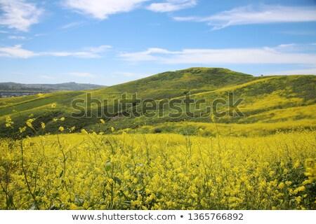 Califórnia · deserto · flora · verde · plantas · ambiente - foto stock © emattil