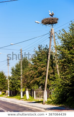 Ninho Polônia pássaro animal cegonha ao ar livre Foto stock © phbcz