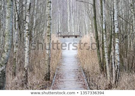 Park Lengyelország erdő tájkép Európa csend Stock fotó © phbcz