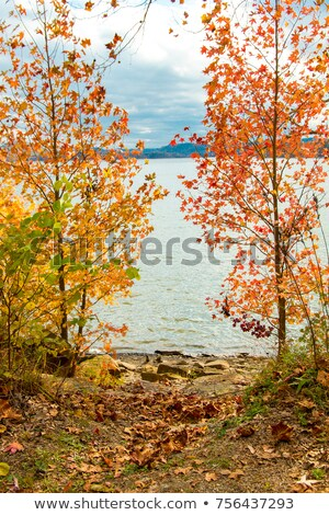 Mountain lake in the frame of trees at evening sunlight Stock photo © Steffus